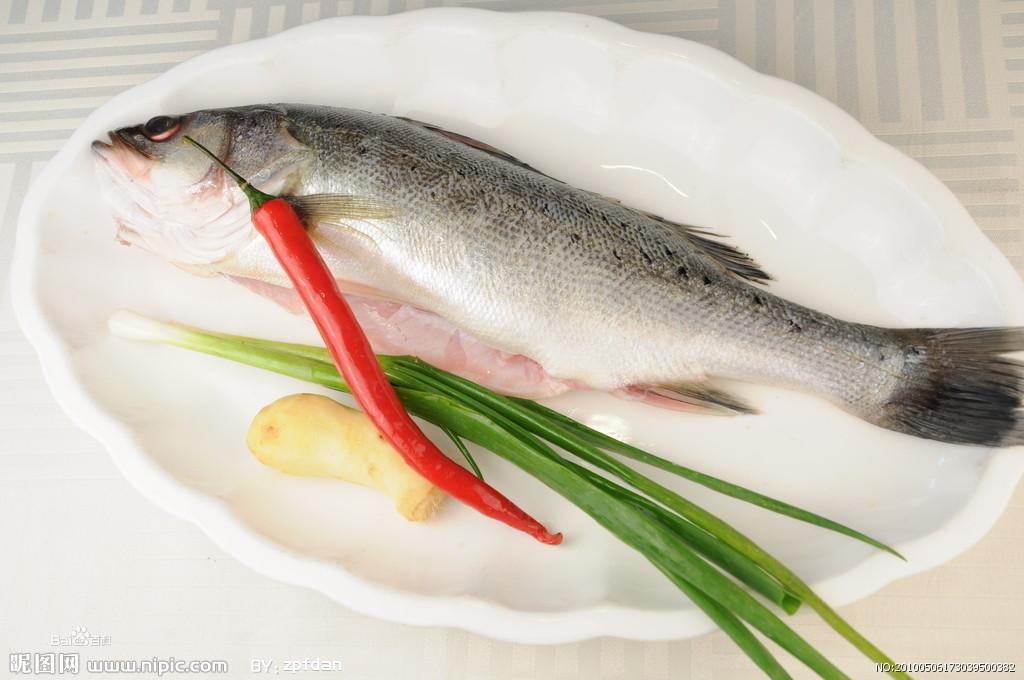 辐鳍鱼纲动物——鲈鱼