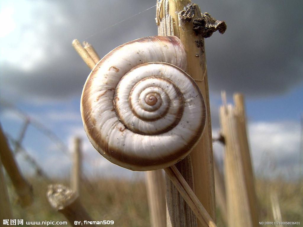 作物是蜗牛上最陆地的软体动物之一,它特别以植物为食,主要喜欢吃小班鲸鱼小常见美术教案图片
