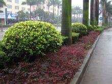 红花��木园林种植