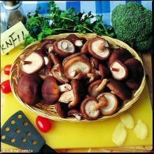 香菇形态图