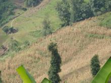 大树地自然村的自然资源