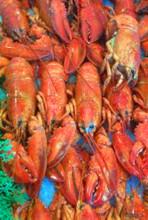 各种龙鳌虾