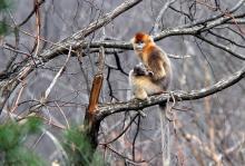 四川的国家保护动物