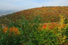 西吉县农业