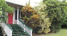 Ohia at Pahala Plantation Cottages