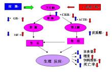 γ-氨基丁酸