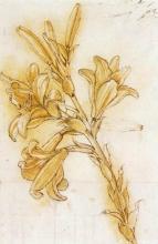 达芬奇在各个领域的绘画作品与手稿