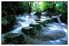 小七孔水上森林