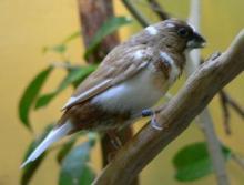 鸟对人类有哪些好处
