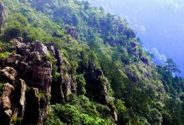 大丰山森林公园图片