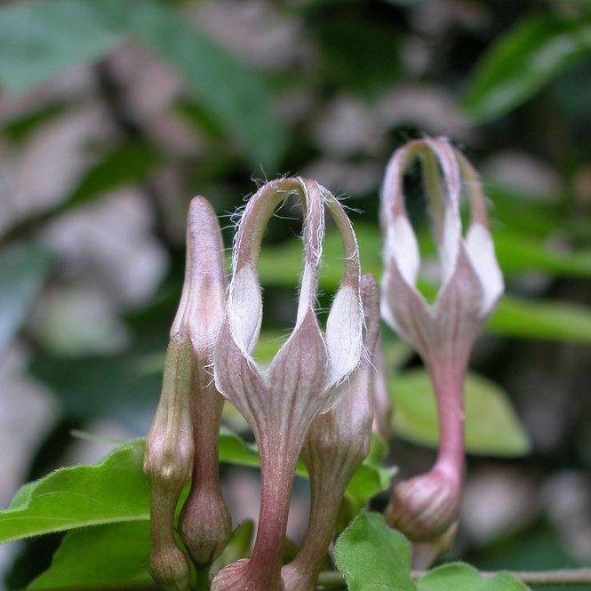 维管植物图片