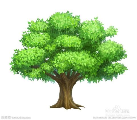 ,特别像头发;松树很多是三角形的;给孩子一个感性认识.   树干,