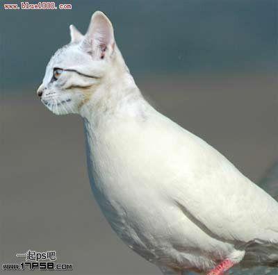 鸟类鸽鸽子鸟动物400_396鸽子不好好抱窝会抱出来吗图片