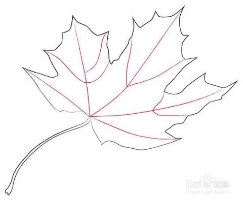 添加一些枫叶的脉络,可以沿着你画的边缘来画.图片