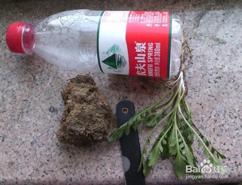 下面,就利用我们经常使用的矿泉水瓶自制一个小花盆,来装点一下办公桌图片