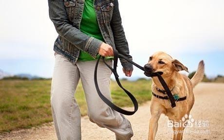 教您怎样解决养狗中遇到的问题
