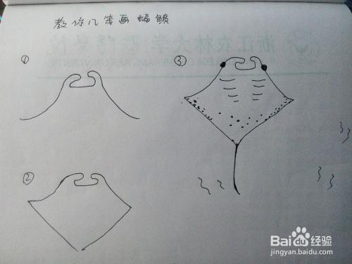 教你几笔画鱼 一