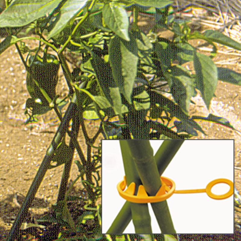 藤蔓植物 花园_藤蔓植物 花园图片