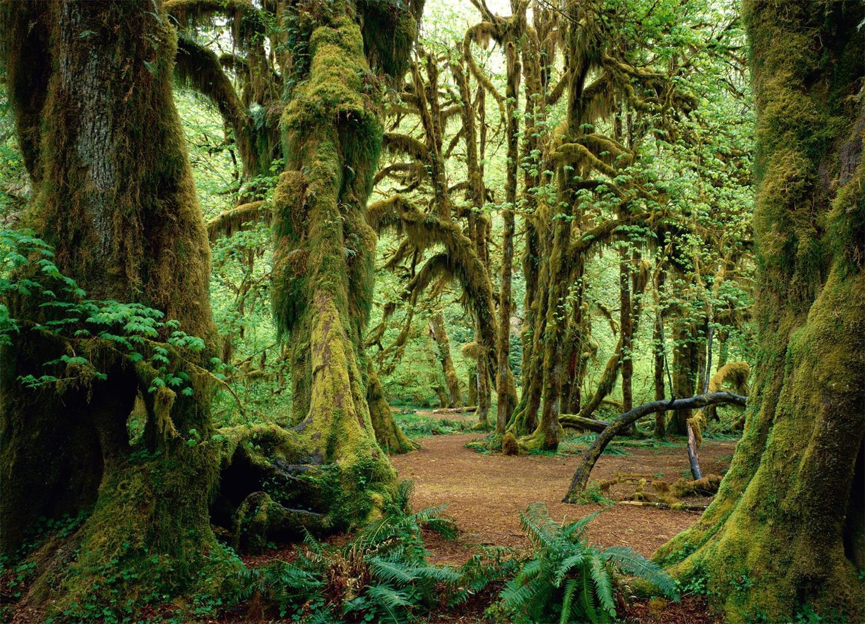 原始森林摄影_原始森林摄影_原始森林摄影图片