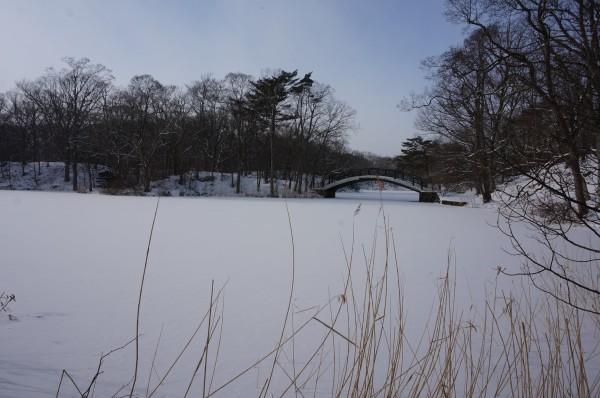 新年伊始的冰雪之旅--北海道(多图!更新完)图片