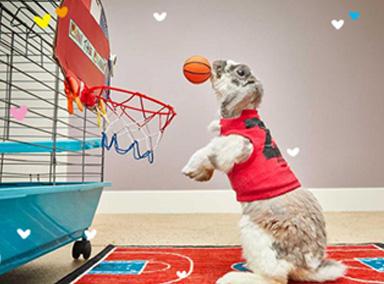这就是兔子界的篮球巨星