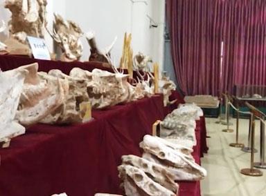 男子收藏数千件古生物化石