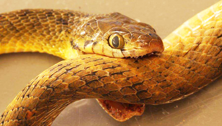 惊奇!蛇竟然自杀身亡