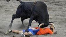 人只能被牛顶 哥斯达黎加另类斗牛