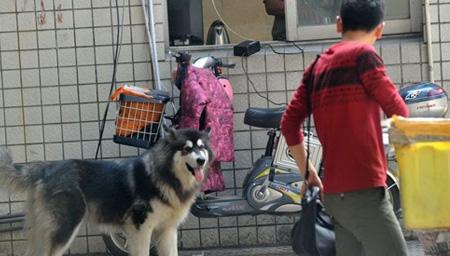 男友力爆棚!5岁男童为保护小女孩孤身驱散野狗