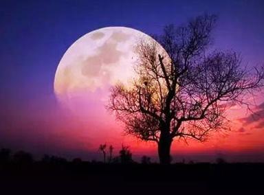 150年一次的超级蓝血月在国外啥样?