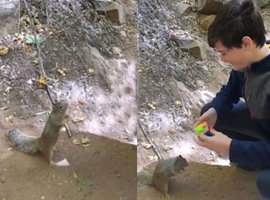 可爱!小松鼠观看男孩玩魔方