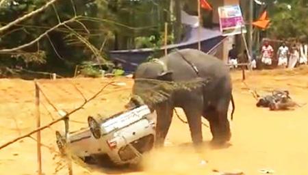 印度大象失控大闹庆典现场 头顶汽车翻转360度