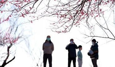 南宁疫期800人扎堆赏山樱花