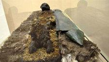 北极圈周边现男性干尸 深埋地下800年保存完好