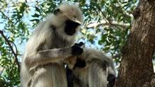 男子靠猴子救助9天生还