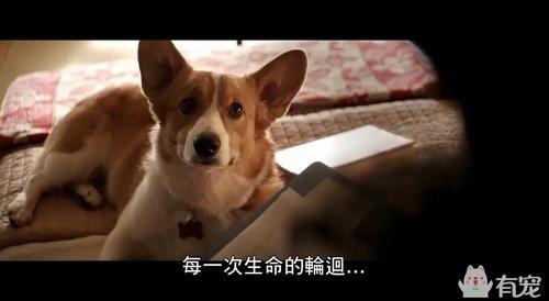 超暖心的萌宠电影《一条狗的使命》,看完全世界都想养狗了