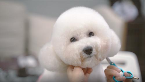 拖把头秒变棉花糖,美容一下就像换了只狗!托尼老师有点厉害
