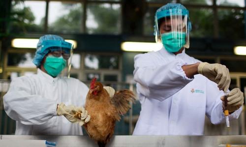 【飞碟头条】H7N9来势汹汹,鸡年还能安心吃鸡吗?