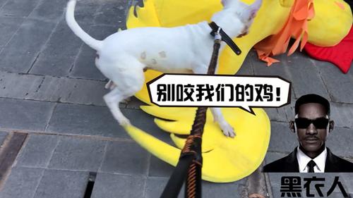 骚扰站街鸡被抓,这狗脸丢大了!