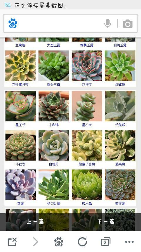 多肉植物的分类