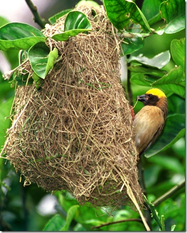 专属能手的鸟叫什么