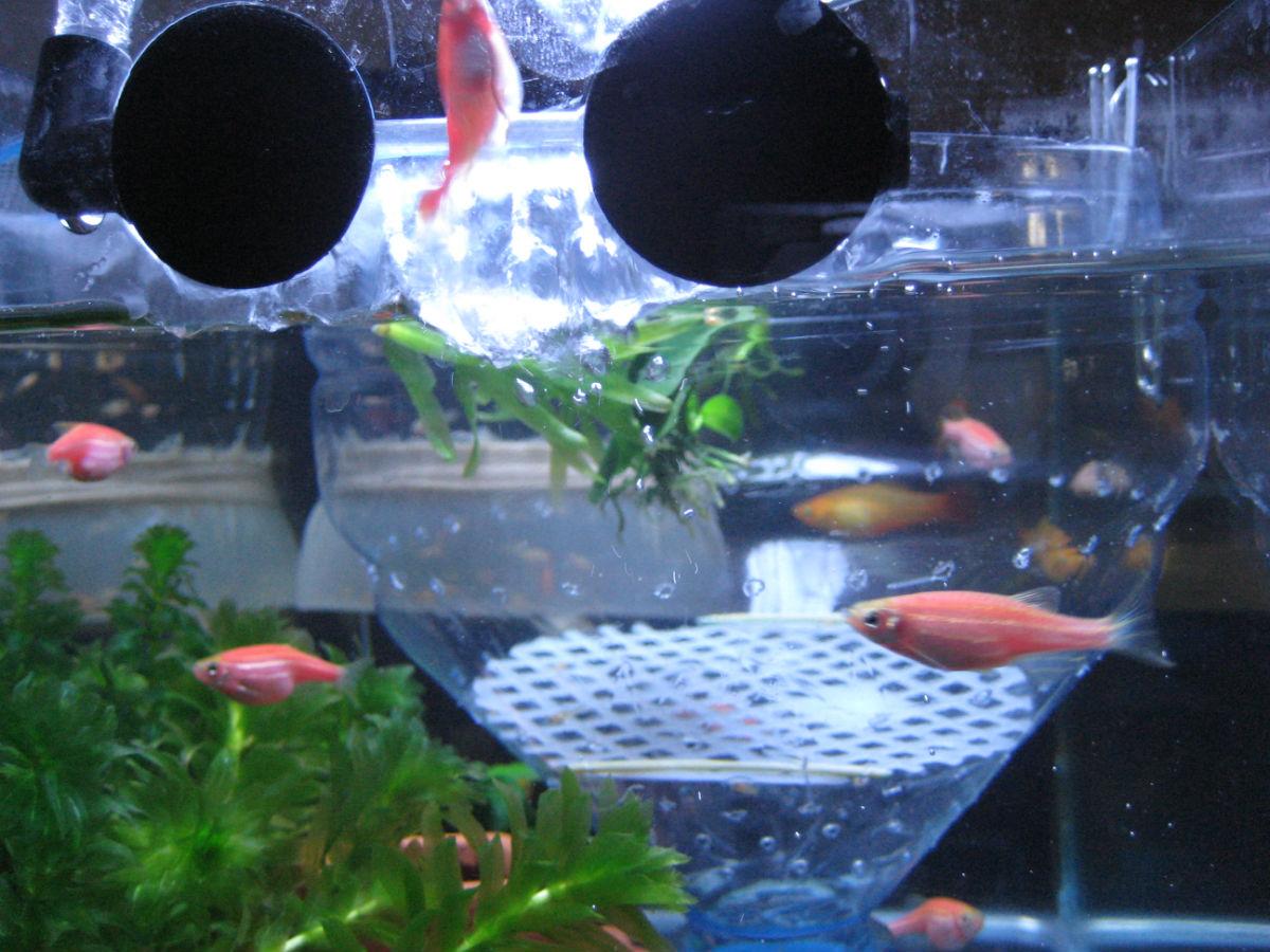 鱼缸啊,注塑啊 |评论 2012-09-12 19:10不咸的糖2005|二级 矿泉水瓶割图片