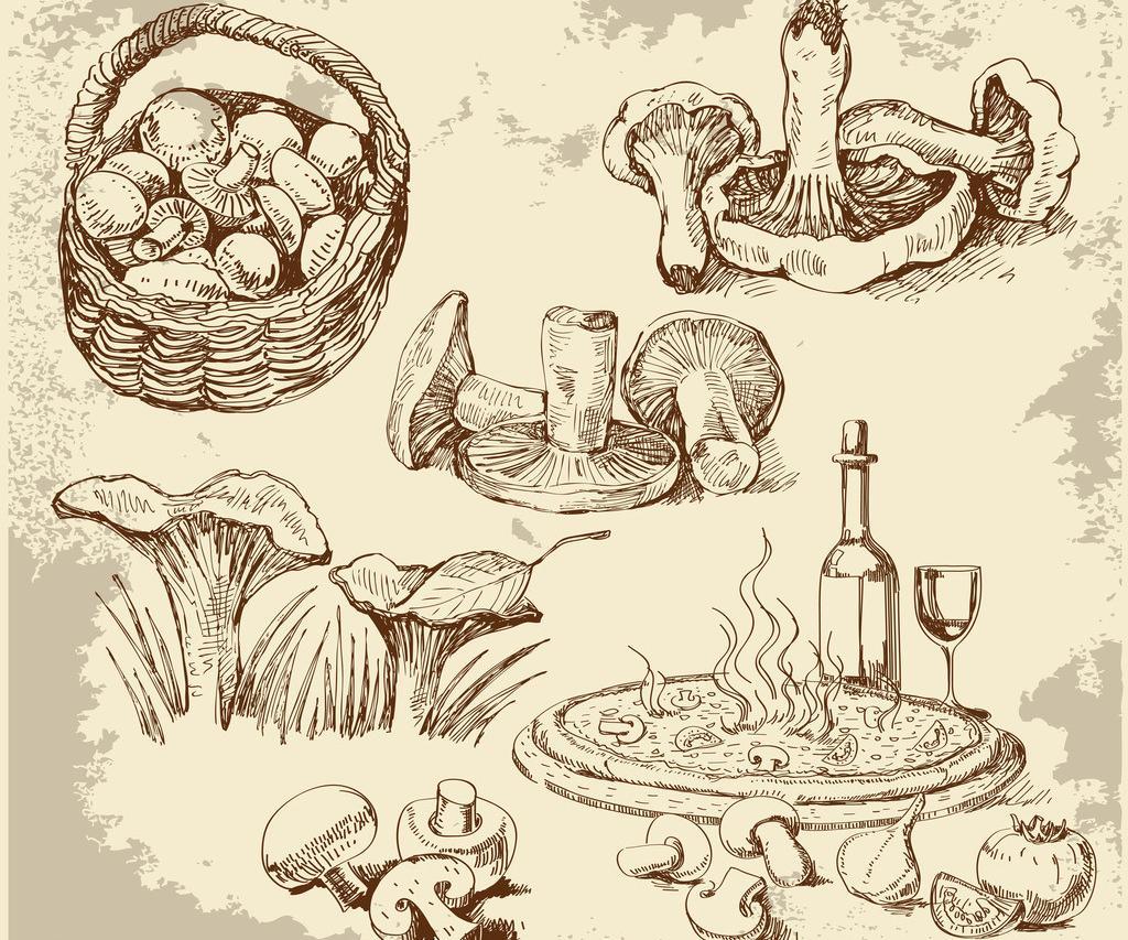 创意速写素材 食物图片