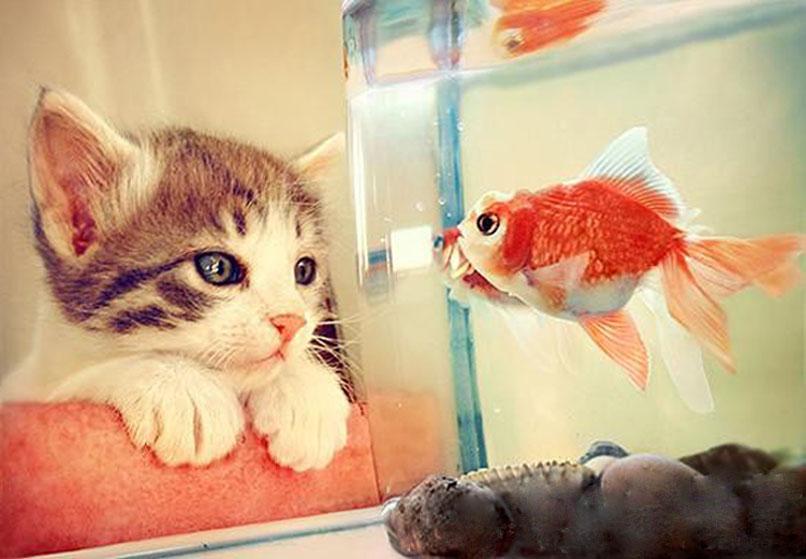 求一张鱼亲吻猫的电脑壁纸,清楚一点哒
