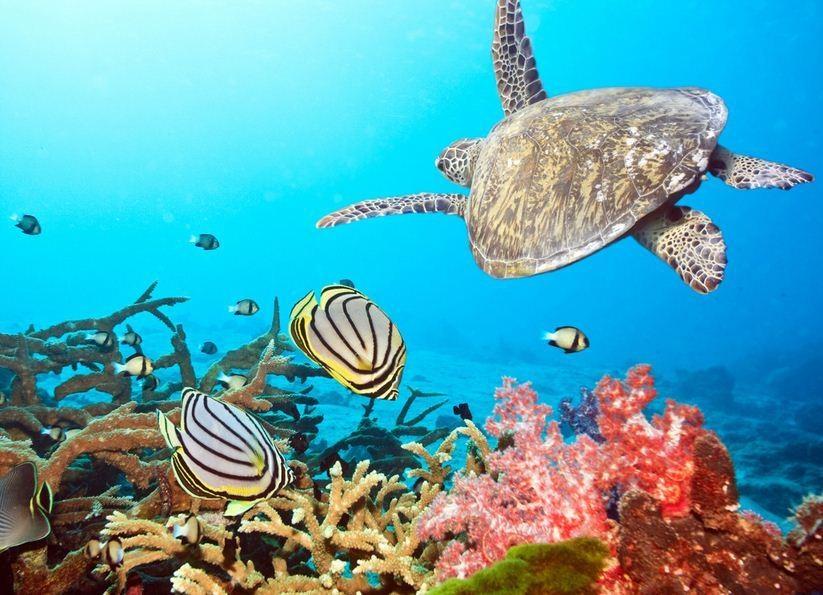 厦门海底世界表演时间