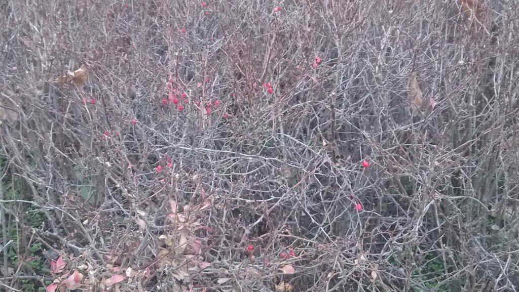 请问这种结小红果的是什么植物