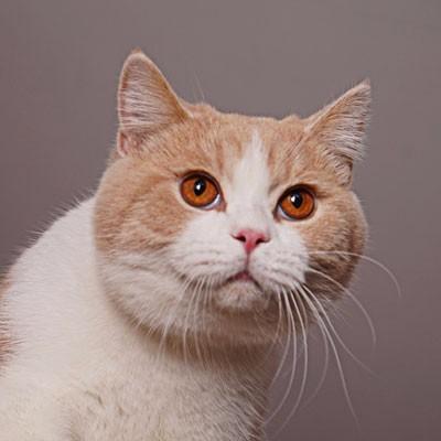 西安最正规的猫舍