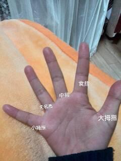 五个手指叫法图解