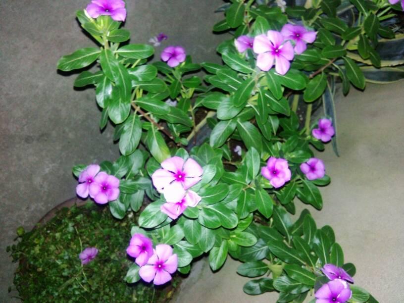 图片中的花叫什么名字啊?