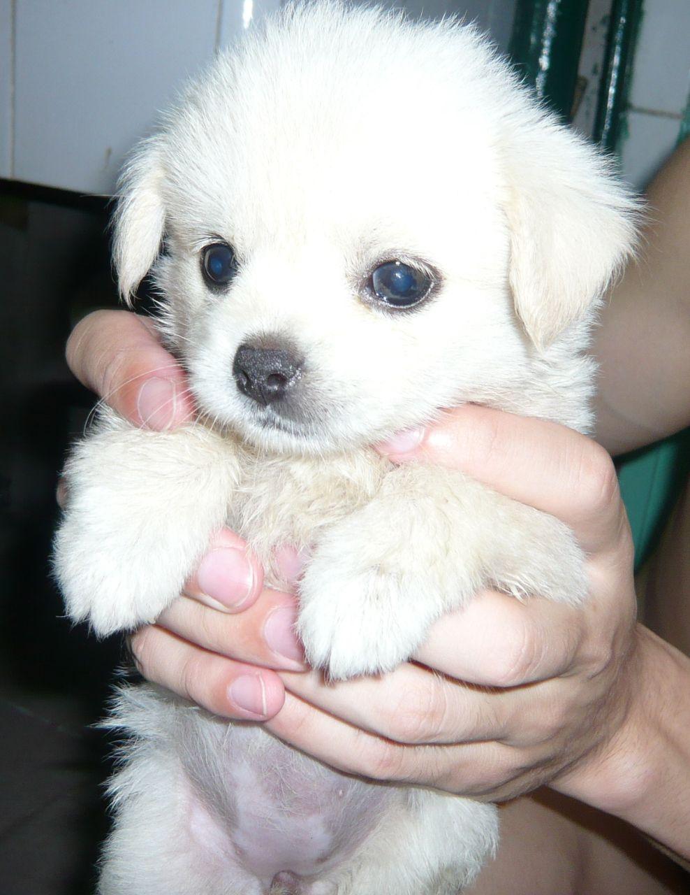 狗,不大点狗叫什么名字 什么品种,多少钱 百度知道